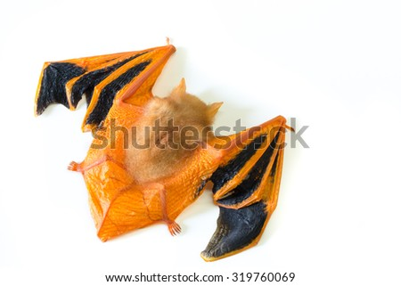 Painted bat, Painted woolly bat - stock photo