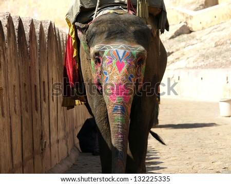 painted elephant in Jaipur,India  ,rajastan - stock photo
