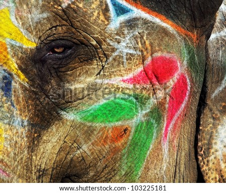 Painted elephant in Jaipur, Rajasthan, India - stock photo