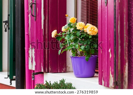 Painted houses decorated with flowers in Italy - stock photo
