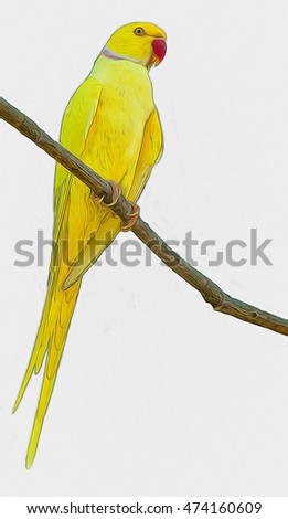Painted in vivid colors Kramer Alexandrine parrot (Psittacula krameri) or Indian ringed parrot sitting on the branch of  tree  isolated on white background
