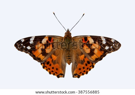 Painted Lady Butterfly isolated on white background - stock photo