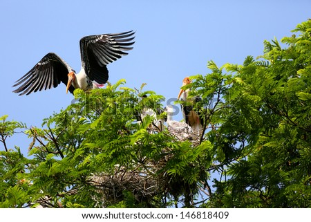 Painted stork with nestling - stock photo
