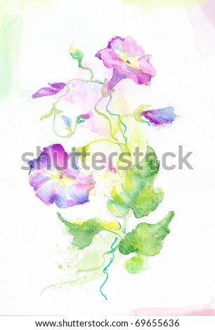 Painted watercolor convolvulus flowers - stock photo