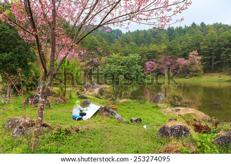 painter artist painting wild Himalayan Cherry spring blossom  - stock photo