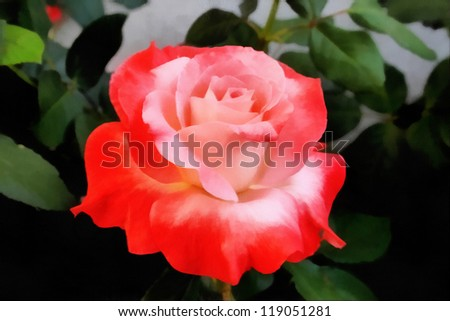 Painting of Beautiful Orange and Pink Rose in Natural Sunlight