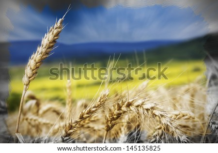 Painting summer landscape with blue sky. Image with selective focus - stock photo