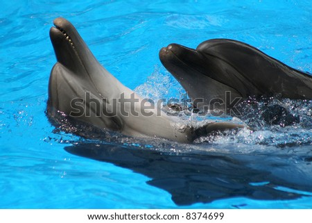 Pair dances of dolphins