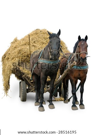 pair horses isolated on white - stock photo