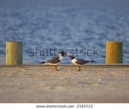 Pair of Black Winged at Fenwick Island, Delaware - stock photo