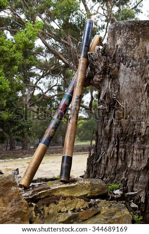 Pair of didgeridoos, indigenous Australian wind instruments, rest against an enormous, tree stump.  Location is Kangaroo Island in South Australia.  Native instrument still in use today.