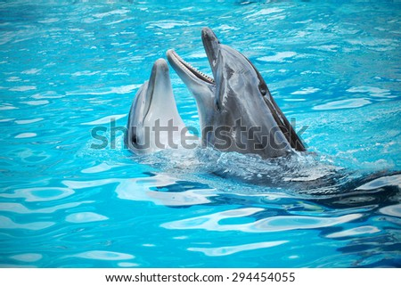 Pair of dolphins dancing in light-blue water - stock photo