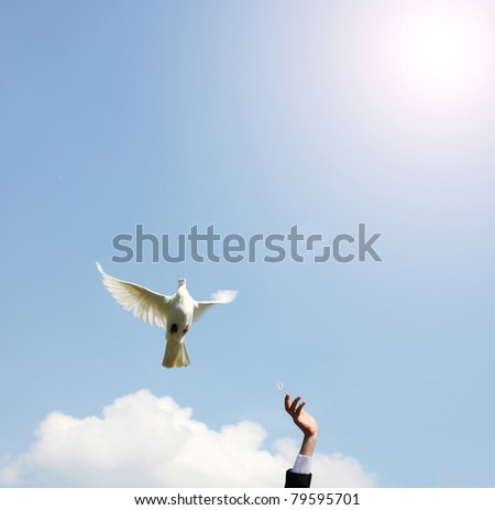 pair of hand releasing a white dove - stock photo