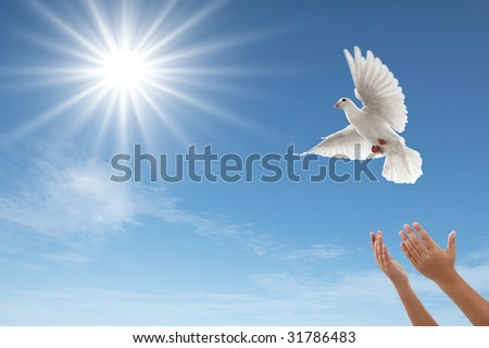 pair of hands releasing a white dove - stock photo