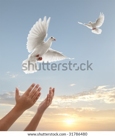 pair of hands releasing white doves during sunset - stock photo