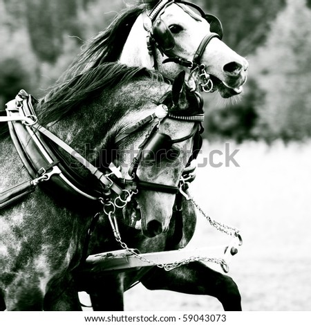 Pair of horses - stock photo