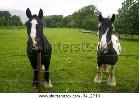Pair of horses in a green field - stock photo