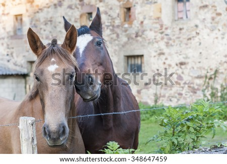 Pair of horses in beautiful and friendly attitude - stock photo