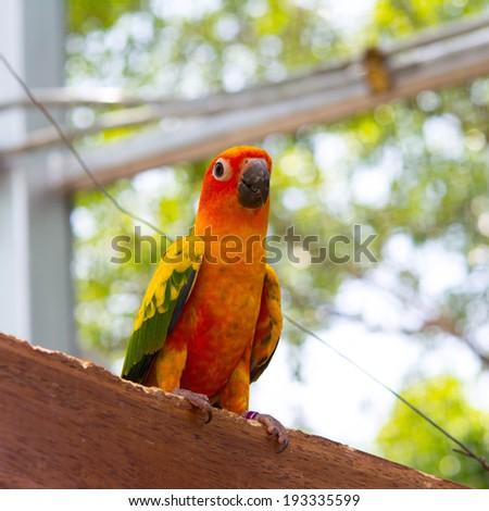 Pair of lovebirds  - stock photo