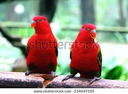 Pair of Red Parrot - stock photo