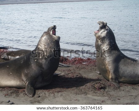 Pair of seals.