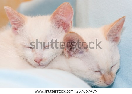 pair of white cats asleep on each other - stock photo