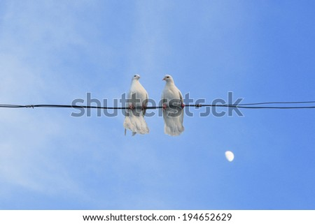 Pair of white doves sitting on a wire against the blue sky with the moon - stock photo