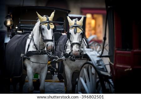 Pair of white horses and retro carriage on stefansplatz in Vienna, Austria. Europe travel. - stock photo