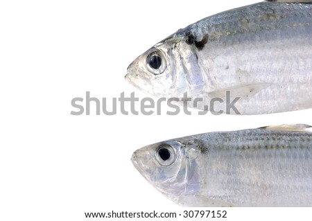 Pair read of pacific fish