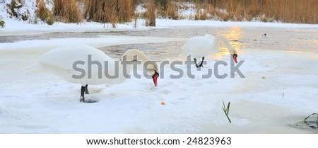 pair swan on winter background for desktop - stock photo