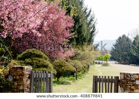 Paju South Korea. April 2015. The Botanical Garden Byeokchoji. The pink cherry blossom trees. green trees and grass. Open wooden doors and fences.