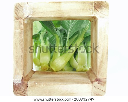 pak choy and blue bell wood - stock photo