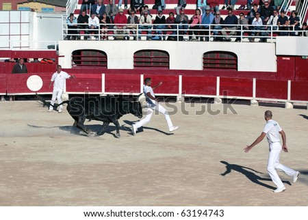 PALAVAS, FRANCE - SEPTEMBER 26: Bull's horn tears competitor Benafitou's pants in bull racing competition on September 26, 2010 in Palavas, France. Benafitou suffering minor injury continued contest. - stock photo