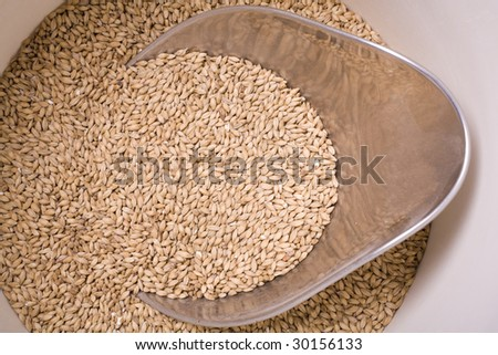 Pale malt barley, an ingredient for beer in a bucket with a scoop. - stock photo