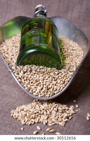 Pale malt barley, an ingredient for beer, with a green beer bottle. - stock photo