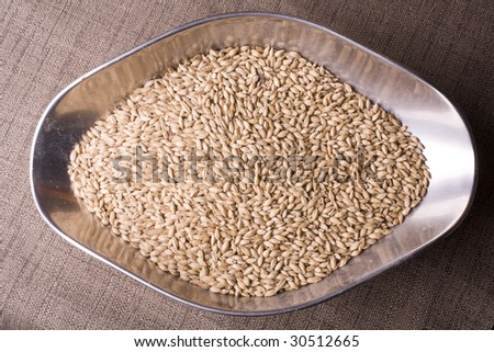 Pale malt barley in a scoop, an ingredient for beer. - stock photo
