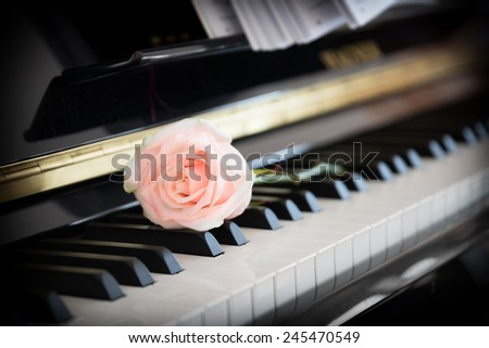 Pale pink rose on the piano - stock photo