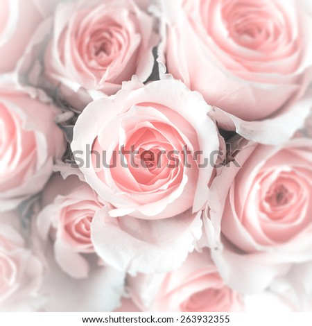 Pale pink roses bouquet with iris blur and white vignette (focus on center) : Background for mothers day card : Happy mother's day - stock photo
