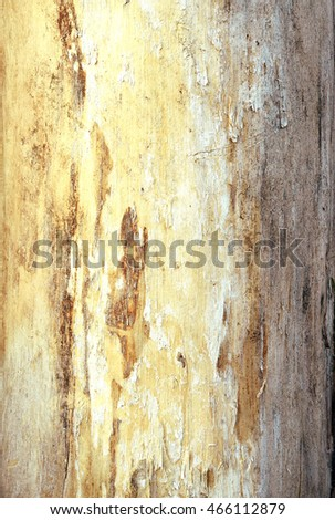 Paled color bark on old tree bark close up show surface details for texture or background. Wood texture