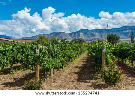 Palisades Colorado vineyard view of grape vines in front of Book Cliffs - stock photo