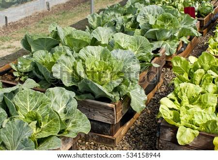 Pallet Vegetable Garden Stock Photo & Image (Royalty-Free) 534158944 ...