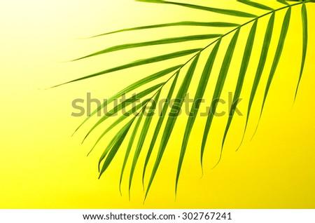 palm - stock photo