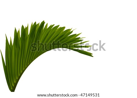 palm - stock photo