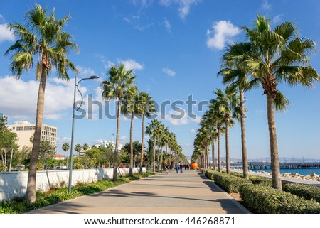 Palm Alley in Cyprus