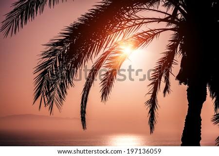 Palm and beautiful sunset  - stock photo