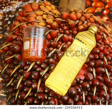 palm and product - stock photo