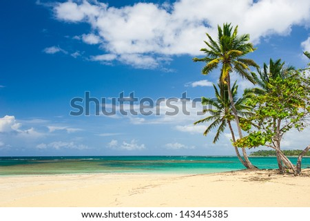 Palm and tropical beach in Tropical Paradise. Summertime holiday in Dominican Republic, Seychelles, Caribbean, Philippines, Bahamas. Relaxing on remote Paradise beach. Luxury Resort on Atlantic ocean. - stock photo