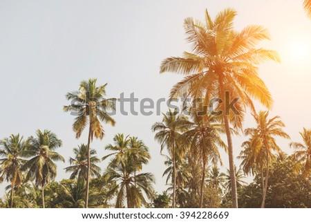 palm beach - stock photo