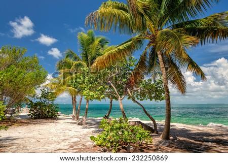 Palm beach. Palm trees on a beach, island in the Caribbean Sea. - stock photo