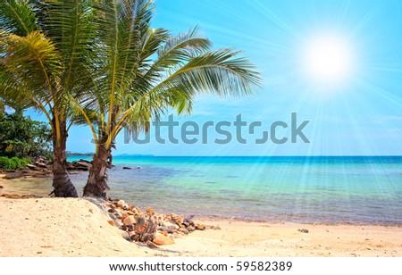 Palm beach under sun - stock photo